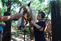 Nicholas Molencupp, 9, prepares to hook his riding partner Socks to a brushing station at SpiritHorse Therapeutic Riding Center in Corinth. Nicholas's mother Darlene Molencupp said the horseback-riding experience has helped her son, who has Down syndrome, develop speech skills.Staff photo by DANIEL HOUSTON  -  neighborsgo