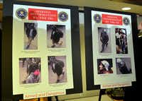 Photographs of two suspects wanted in the Boston Marathon bombings released by the FBI are shown at a press conference April 18, 2013 in Boston.STAN HONDA - AFP/Getty Images