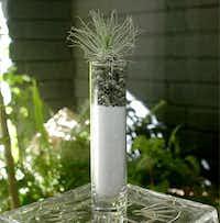 Tillandsias make ideal desktop plants; they need a spritz of water twice a week.Cindy McNatt  -  Orange County Register