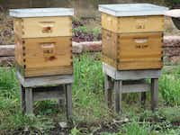 The Fairmont Dallas has a rooftop garden that includes beehives. Honey from the hives supplies the hotel's Pyramid Restaurant.