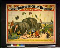 """A circus poster from circa 1899 shows """"The great Forepaugh & Sells Brothers shows combined--Terrific flights over ponderous elephants by a company of twenty five splendid artists in a great contest for valuable prizes."""" According to the book """"Topsy,"""" by Michael Daly, Forepaugh & Sells were the keepers of Topsy the elephant's last herd."""