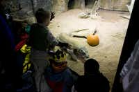 Kids can join a costume parade, see the animals and visit the pumpkin patch at Fort Worth's Boo at the Zoo Oct. 25-27.