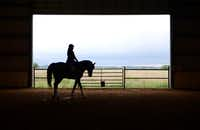 Assistant trainer Sara Sasso rides American Xpress at Black Star Sport Horses in Rockwall. The training facility, which has 51 horses, breeds and trains horses that go on to compete nationally and internationally in the sport of dressage.Staff photos by ROSE BACA -  neighborsgo