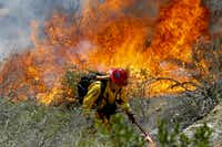 California Fire Capt. Mark Miller lights a backfire as he and a crew from Oak Glen Fire Camp in Riverside try to knock down a brush fire near Oriole Court in Carlsbad, Calif., on Wednesday, May 14, 2014. Thousands were asked to evacuate their homes in Carlsbad after the blaze erupted at about 10:34 a.m. Wednesday and spread through rapidly heavy brush before jumping into residential areas. (AP Photo/U-T San Diego, Hayne Palmour IV)Hayne Palmour IV - AP