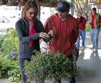Rachel Farber (left), 45, of Plano, and her husband Scot, 46, choose a Million Belles plant at the the Collin County Farmers Market in Plano which was having their opening day on Saturday, April 20, 2013.Stewart F. House - Special Contributor