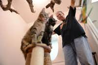 Volunteer Daryl Davis plays with two kittens up for adoption at the East Lake Cat Care Center in Lake Highlands. The feline-only facility, which had a soft opening in November, offers medical care seven days a week, lodging and pet adoptions.ROSE BACA