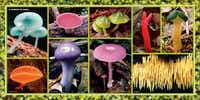 """""""A rainbow of fungi"""" from  """"The Secret Language of Color,"""" by Joann Eckstut and Arielle Eckstut."""