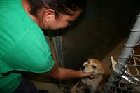 Part-time Lancaster Shelter employee Katherine Corrao checks in on one of the residents.