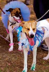 Jessica (right) and Lexi came to Dog Days of Denton dressed up as many of the participants of the yearly event at Quakertown Park did Friday, June 4, 2010, in Denton.