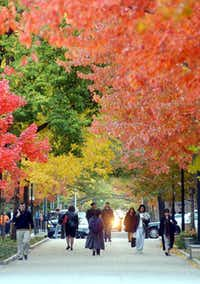 In New Haven, Conn., you'll find beautiful fall color in parks around town and on the Yale University campus.