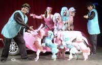 The Cartoon Poodles, a troop of canines that do everything from dancing to riding scooters on stage, will perform with Rafael Abuhabda (from left), Isabel Urra and their son Hamin Abuhabda in Cirque Banquiste from Dec. 27 through Jan. 1 at the Rosewood Center for Family Arts.