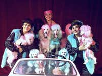 The Cartoon Poodles, a troop of canines that do everything from dancing to riding scooters on stage, will perform with Hamin Abuhabda (from left) and his parents, Isabel Urra and Rafael Abuhabda in Cirque Banquiste from Dec. 27 through Jan. 1 at the Rosewood Center for Family Arts.