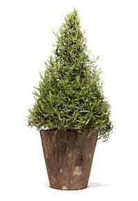 Rosemary topiary, $30, and bark-covered pot, $45, Nicholson-Hardie Garden Center