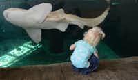 The Children?s Aquarium at Fair Park will be part of the fun at Summer Adventures in Fair Park.