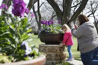 Emily Ellis, 4, of Rockwall, is photographed as she smells a bed of flowers along The Paseo walkway during the Dallas Blooms floral festival, on Wednesday, March 19, 2014 at the Dallas Arboretum in Dallas.Ben Torres - Special Contributor
