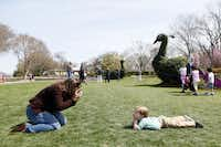 Marissa Pinder photographs her son Grant Pinder, 3, in the Jonsson Color Garden at the Dallas Blooms floral festival, on Wednesday, March 19, 2014 at the Dallas Arboretum in Dallas.Ben Torres - Special Contributor