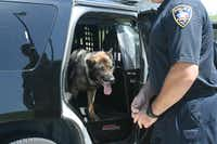 Coppell K-9 teams are equipped with special SUVs that have a built-in kennel for the dogs.Staff photo by MEREDITH SHAMBURGER - neighborsgo