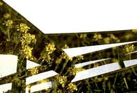 A double-exposure image shows nearby flowers framed in the High Five Interchange. Part of the city's soul-searching must address its devotion to the automobile.Photo illustration by G.J. McCarthy - Staff Photographer