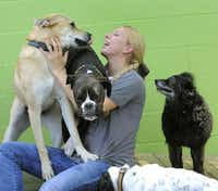 Stay Pet Resort manager Melissa Jackson plays with the dogs in the outside yard.Lloyd Fox  -  The Baltimore Sun