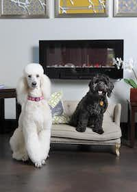 Stay offers hotel-style amenities including king-size beds, flat-screen TVs and webcams, so owners can check in on their pets.Lloyd Fox  -  The Baltimore Sun