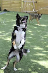 The dogs enjoy their outdoor play so much that some are reluctant to go home when their owners return from their travels.Lloyd Fox  -  The Baltimore Sun
