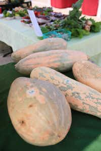 Butternut squash from Good Earth Organic Farms being sold at White Rock Local Market, on Sept. 07, 2013 in Dallas.
