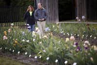 Michael Reed, right, and his wife Mary Ellen Reed, left, look around and photograph iris garden together during the the national iris convention at the iris garden in Addison on April 18, 2013. Michael Reed is president of the Dallas Iris Society and has been working on a, public iris garden for more than a year.