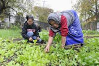 Anita Subba, left, and Buddi Rai, resettled in Dallas by the International Rescue Committee, had vegetable gardens in their village in Nepal.