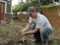 Stephen Smith transplants okra in one of the backyard beds.Ron Baselice  -  Staff Photographer