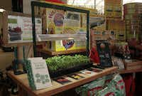 Young tomato plants using the JumpStart seed starter,on display at North Haven Nursery in Dallas, on Jan 18, 2013.