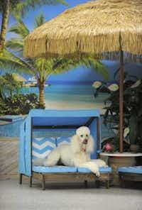 Sunbathing at Stay Pet Resort.Lloyd Fox  -  The Baltimore Sun