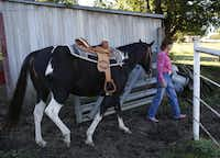 Amber Parker walks her horse, Cherokee, to a field behind at her home in Ovilla, Wednesday, Oct. 23, 2013. Parker rides her horse to stay fit.