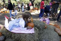 Dressed as Dorothy from the Wizard of Oz -- down to the ruby red slippers -- Sabrina Jimenez, 2, poses while waiting for her mother to take a photo at the Dallas Arboretum on Halloween, Monday, October 31, 2011. The Dallas Arboretum celebrated Halloween with festivities such as face painting, arts and crafts and a petting zoo.
