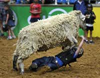 Six-year-old Noah Howald of Richardson had trouble hanging on to his sheep at Saturday's Mutton Bustin.