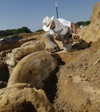 Ron S. Tykoski, a fossil preparator for the Perot Museum of Nature and Science, excavates a preserved mammoth skeleton from an Ellis County gravel pit. The pit's owner, Wayne McEwen, is donating the skeleton to the museum.Michael Ainsworth - Staff Photographer