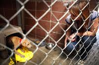 Erin McFaye, operations coordinator at The Bridge, checks on a puppy named Buddie at the kennel. Dogs are the only pets allowed.
