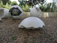 The statue of a turtle coming out of it's shell is one of the sights toddles will see when visiting in the First Adventure Gallery at the Dallas Arboretum's new Rory Meyers Children's Adventure Garden. The First Adventure Gallery is design for toddlers.