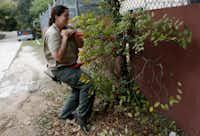 Dallas Zoo lead keeper Megan Lumpkin used hedge clippers to prepare a snack for okapis Desi and Almasi.