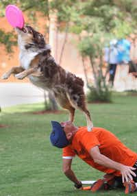 Bam Bam, an Australian shephard, performed tricks with his owner, Chuck Middleton of Dallas, during the adoption celebration. About 10 dogs at the event were adopted.