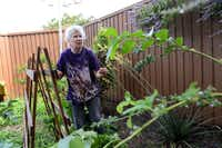 Catherine Lake tends to her organic garden in her Prestonwood neighborhood. The area was found to be the best overall place to live in the Richardson and Far North Dallas areas, according to a data analysis by The Dallas Morning News.