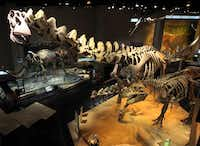The main dinosaur exhibit in the Life Then and Now Hall at the Perot Museum of Nature and Science depicts the Alamosaurus (the really tall one), a native Texan.File 2012  -  Staff Photo