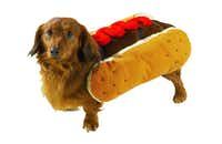Hot diggity dog: Put your pup between two plump poppy-seed buns from PetEdge. The costume has adjustable, elasticized Velcro straps and is easy to take on and off. Available in three sizes, $22.99 to $26.99.PetEdge