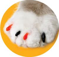 Soft Claws seasonal nail capsfor cats  are cute and practical. The vinyl caps slip easily over trimmed nails with the help of an adhesive to secure them. $21.99 a set at Petco.