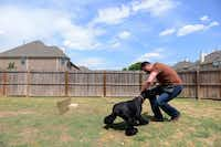 Butler, a Frisco police officer and dog trainer, trains Gracie, a giant schnauzer, at his Frisco home last week. Butler and his wife, Christine Butler, have trained pet dogs for almost 10 years.Photos by ROSE BACA - neighborsgo staff photographer