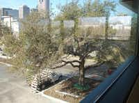 The cafe area of Dallas CASA's new offices looks down on a Live Oak tree that is more than 100 years old. The tree was relocated from another spot on the building site but is doing well in its new location.Staff photos by ANANDA BOARDMAN