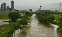 Ironic that just when the Trinity River looks most like, you know, a river, people can't get down to the floodway to actually enjoy the thing (Nathan Hunsinger/Staff photographer)