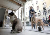 Cats rule indoors; dogs drool outdoors at MiaGola.MARCO BERTORELLO -  AFP/Getty Images