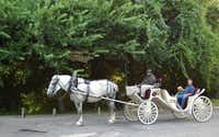 M&M Carriage Service owner Moses Moore offers carriage rides around Victoria, Texas's tree-lined Riverside Park.