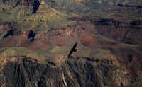 Sandstone at the Grand Canyon is buffed a tawny red, with sculpted, soaring cliffs. Birds swoop overhead.WASHINGTON POST -  The Washington Post