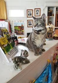 "Chester the cat certainly likes the treats that he gets around the historic Chestnut Square complex. ""He really likes the Ice Cream Crank Off and when we make butter for the camps, he's right there,"" says Chestnut Square Historic Village Executive Director Cindy Johnson, of McKinney."